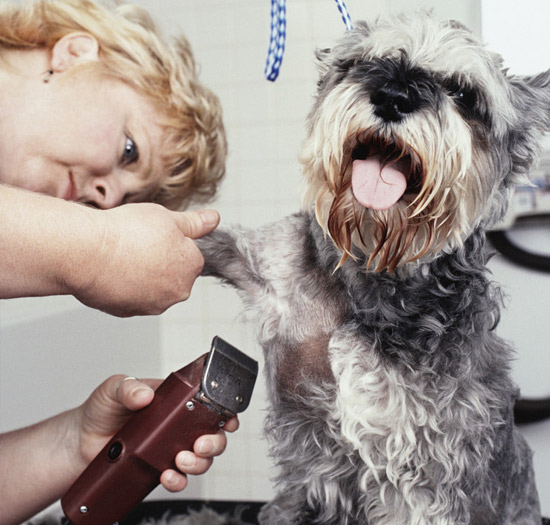 Grooming School Classes At Grateful Pets Professional Dog Pet